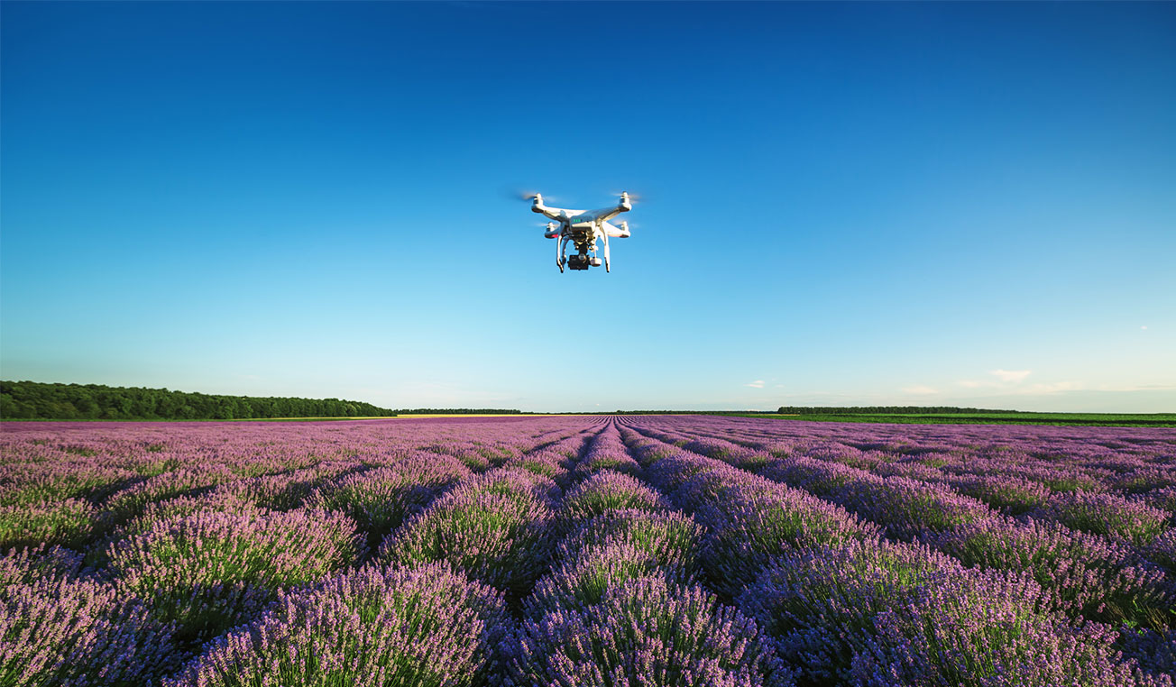 Drone hovering over lavender field